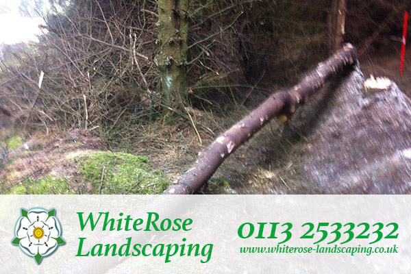 Whiterose Landscaping are qualified tree surgeon in Morley