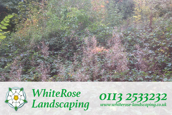 Whiterose Landscaping garden clearances in Morley Leeds