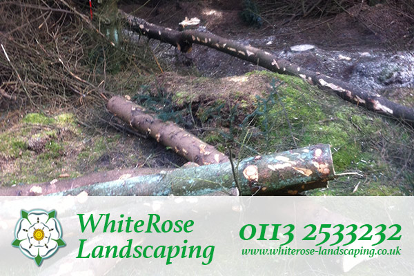 Whiterose Landscaping qualified tree surgeon in Morley